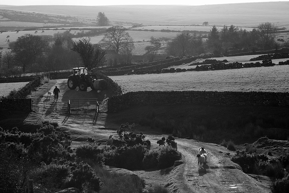 Farm scene Dartmoor
